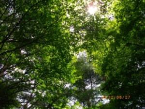 2012_0627_104935imgp0497_200x150